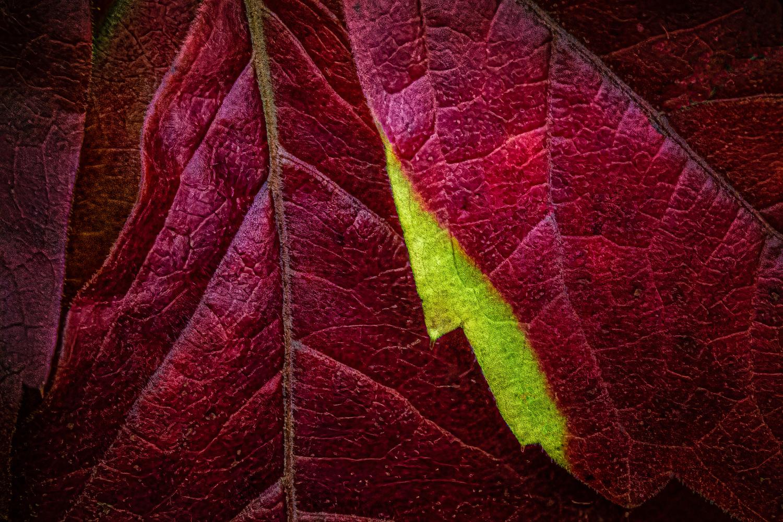 Autumn Detail by Jim Elve