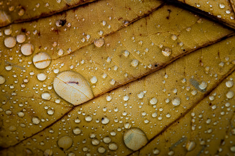 Rain by Jim Elve