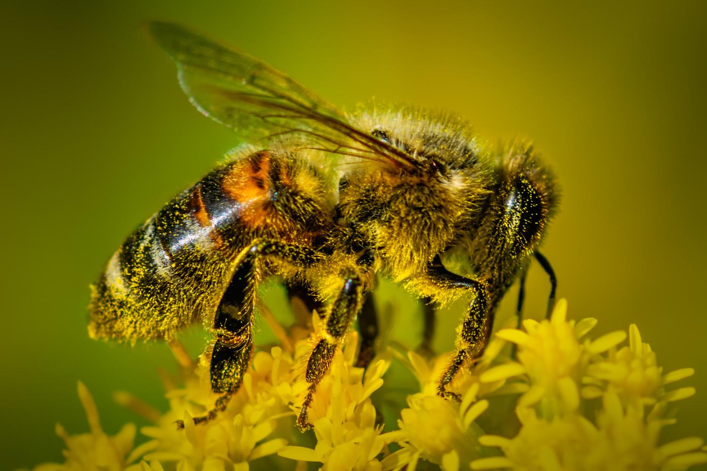 Pollinator by Jim Elve