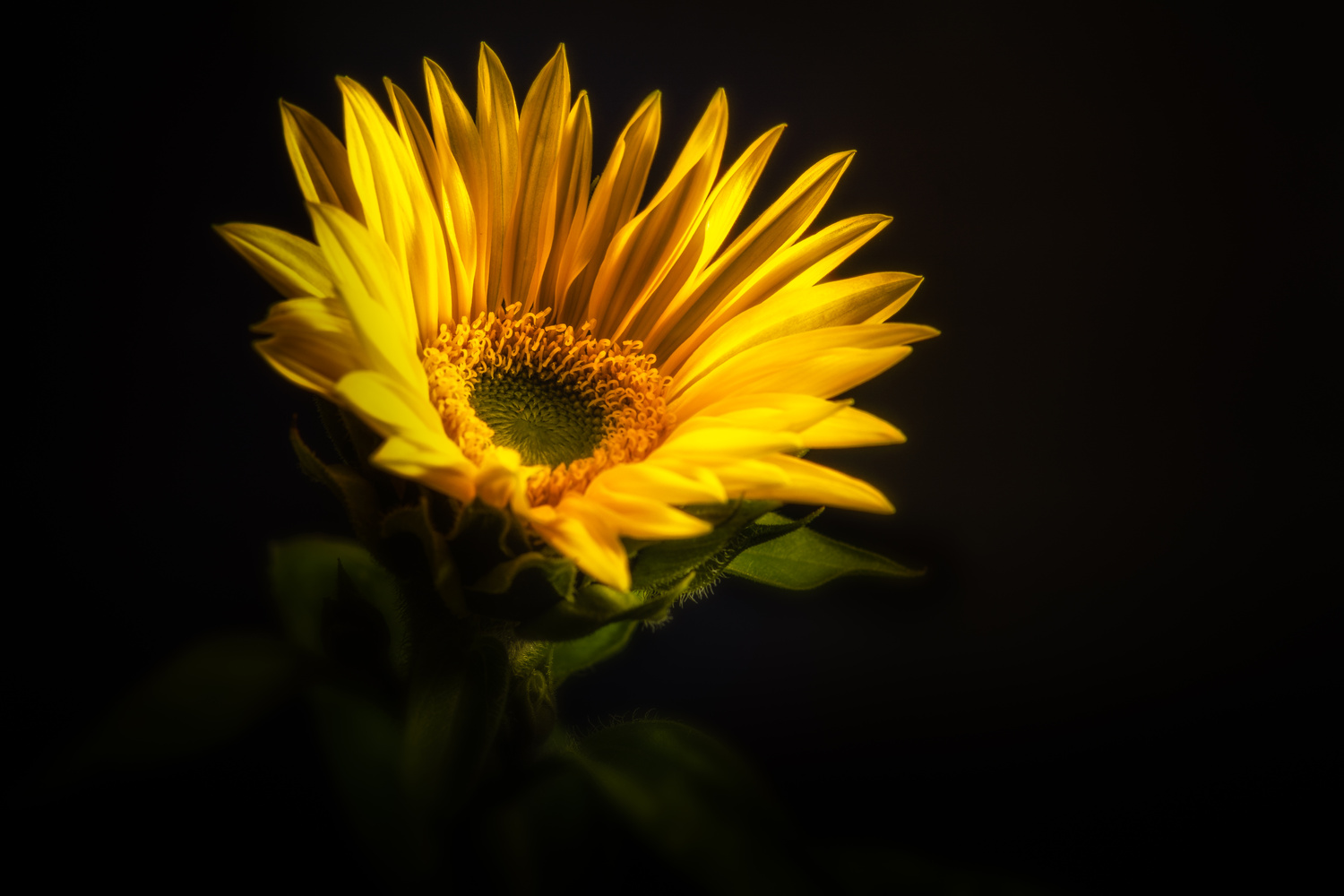 Late Bloomer by Jim Elve