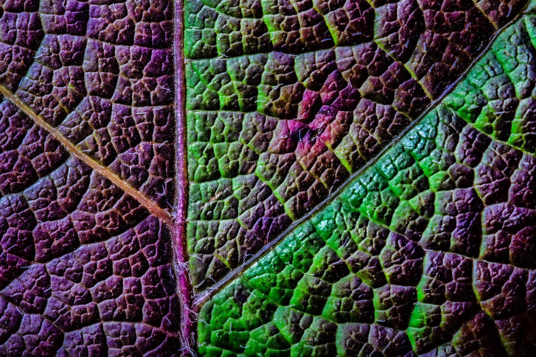 Hydrangea Leaf by Jim Elve