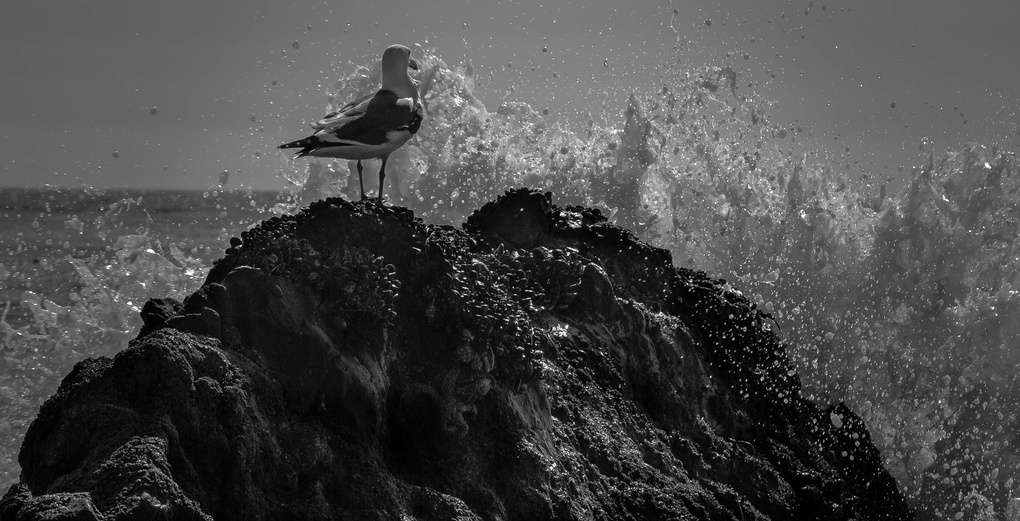 SeaGull Splashed by Edward Lebron