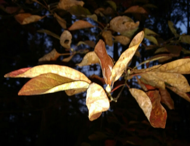 Fall Color  by audra crall