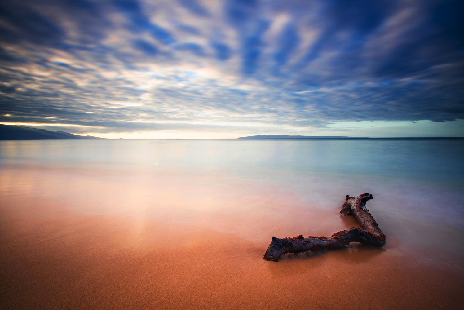 Driftwood by David Wilder