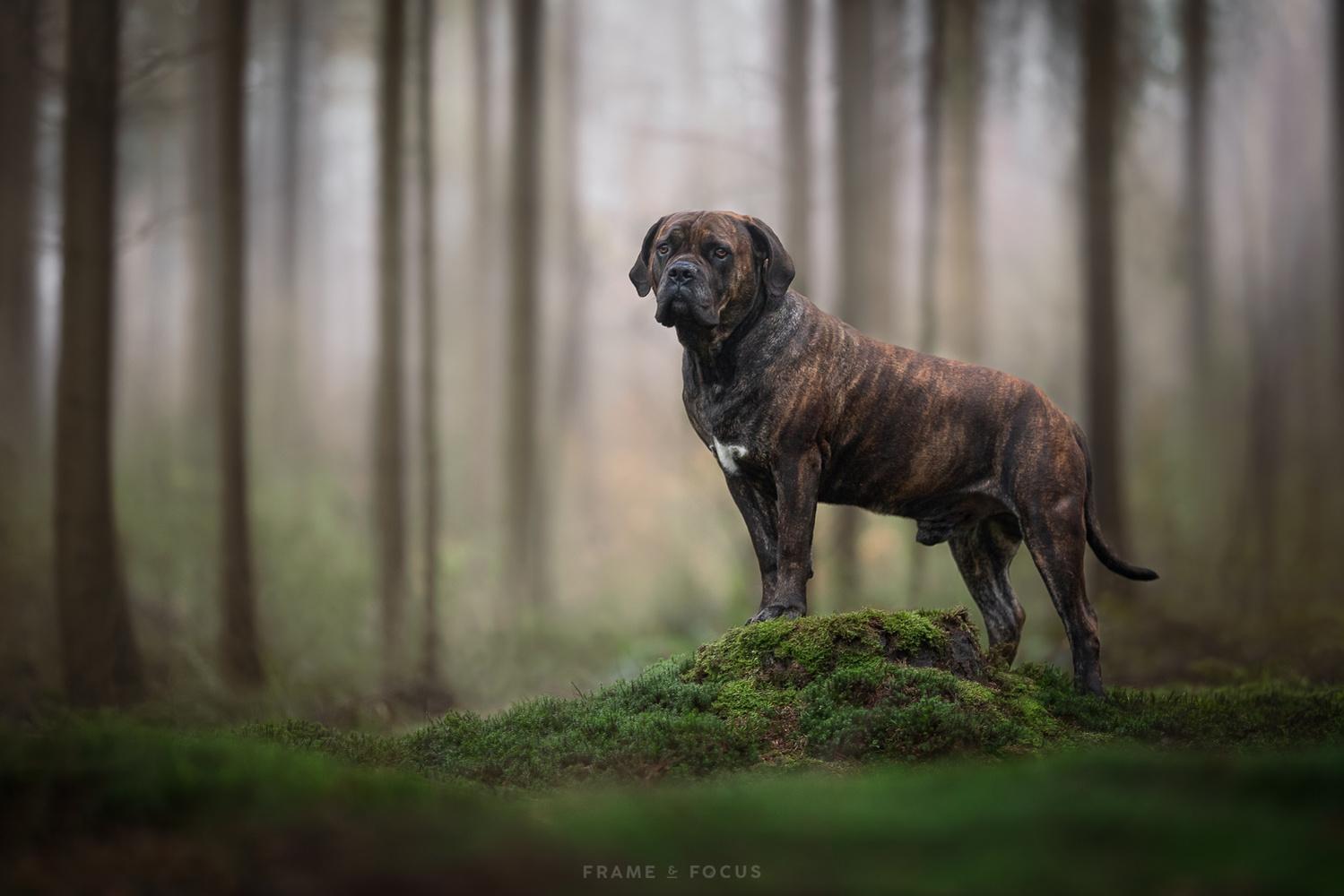 King of the moss by Marieke Kemp
