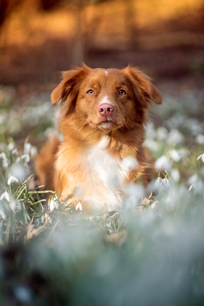 Hayley in flowerbed by Marieke Kemp