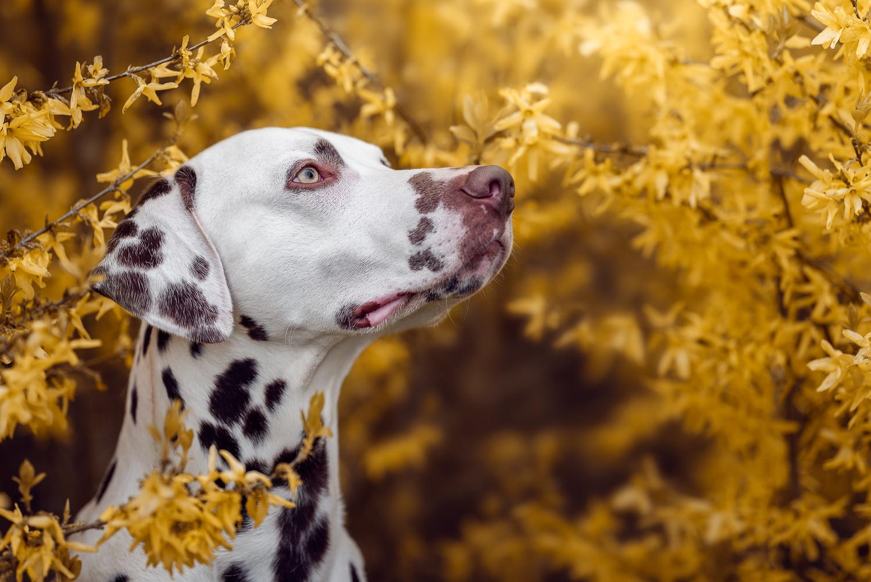 Yellow spring part 3 by Marieke Kemp