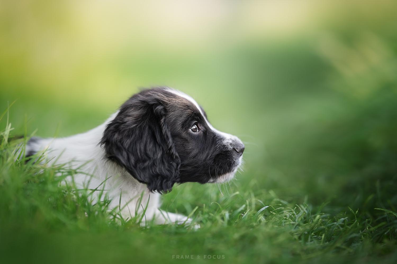 Cute puppy Whistler by Marieke Kemp