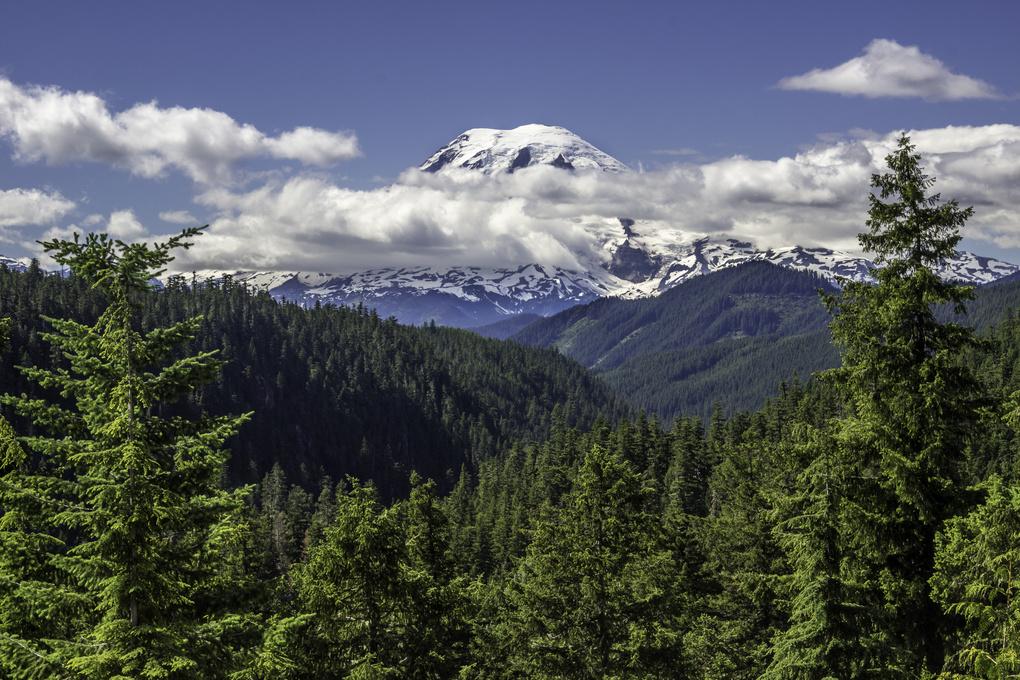 Mount Rainier by Randal Davis