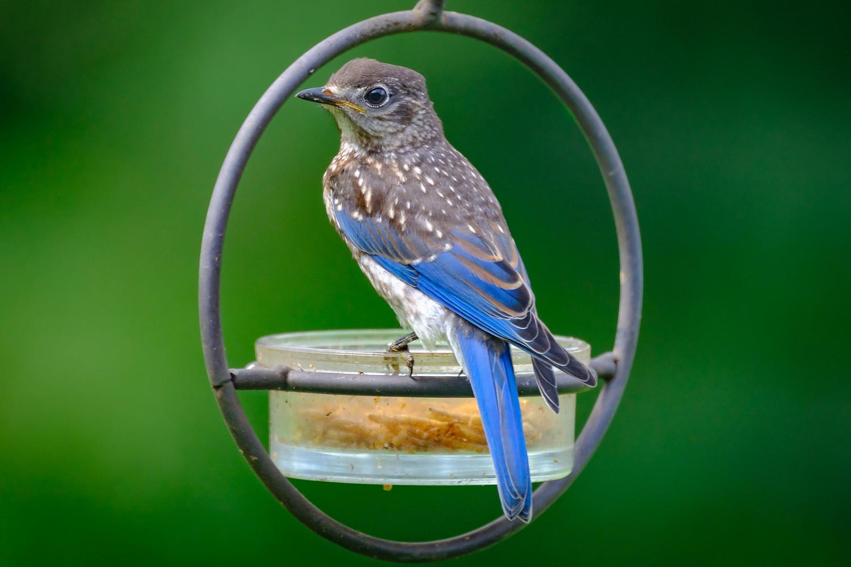 Blue by Larry DeJournett