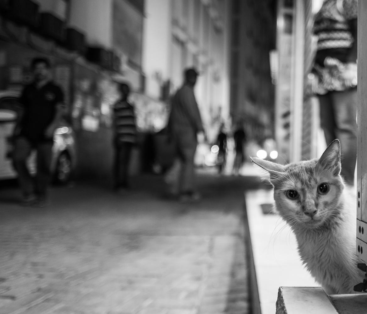 I CAN SEE YOU by Mustafa Bastaki