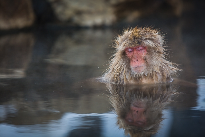Snow Monky: Relax by Heath Smith