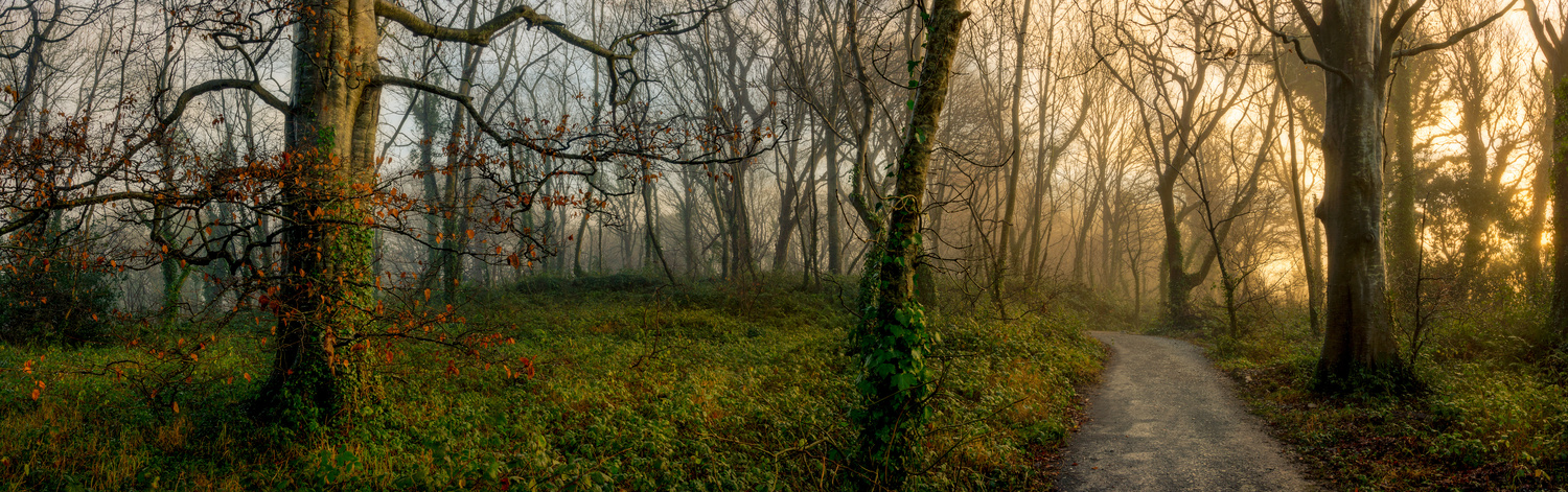 Woodland Morning by Mike O'Leary