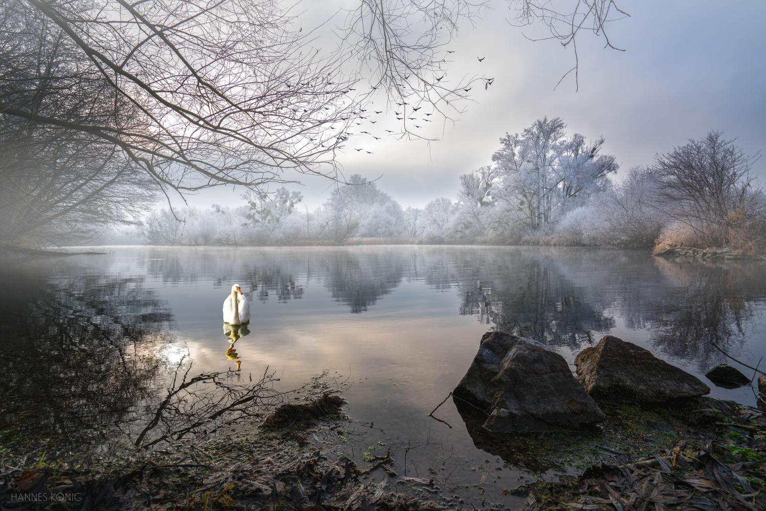 Morning Fog by Hannes Koenig