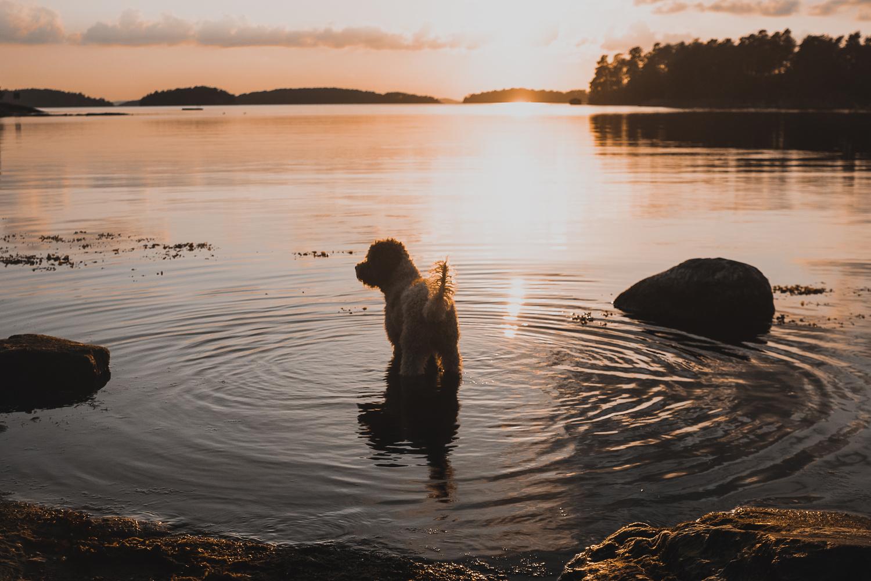 Dog in wilderness by Oliver Rykatkin
