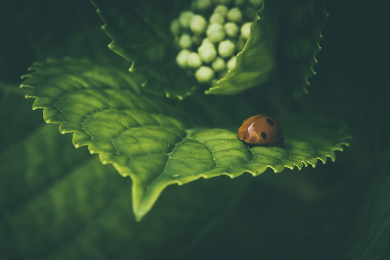 ... Ladybug .... by Enrico Sottocorna