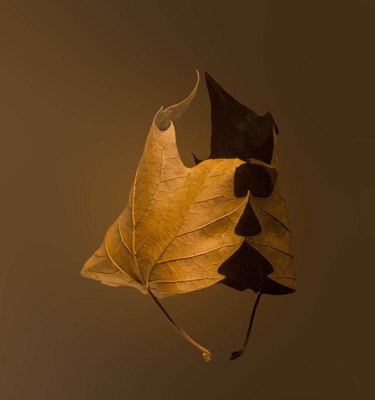 Dancing leaves by Janna Broski