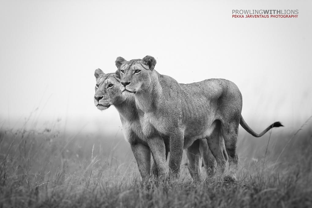 Sisters, Masai Mara. by Pekka Järventaus