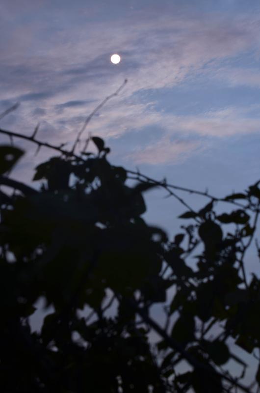 Sunrise Moon by skyler barr