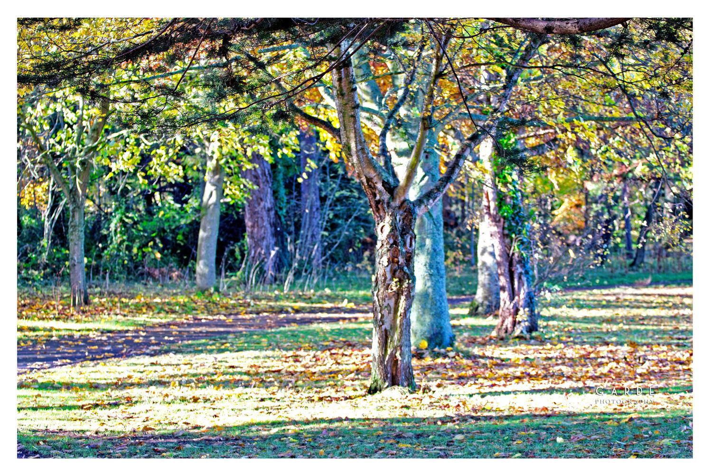 The Park in Autumn Lustre by Joe Garde