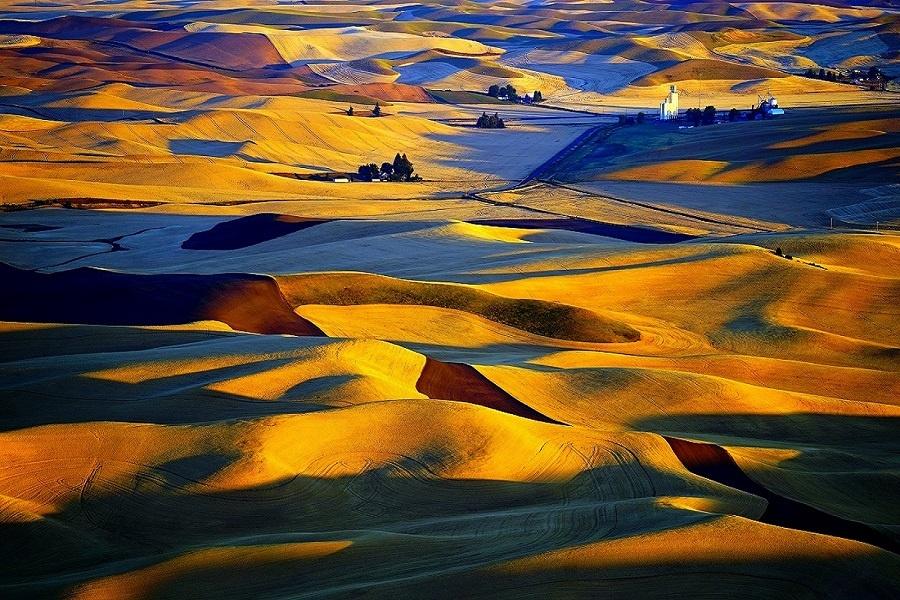 The Golden Fields by viral padiya