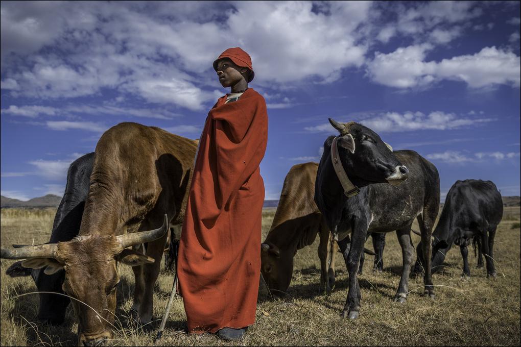 Herd Boy by Michael DeStefano