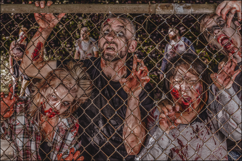 Zombies!!! by Michael DeStefano