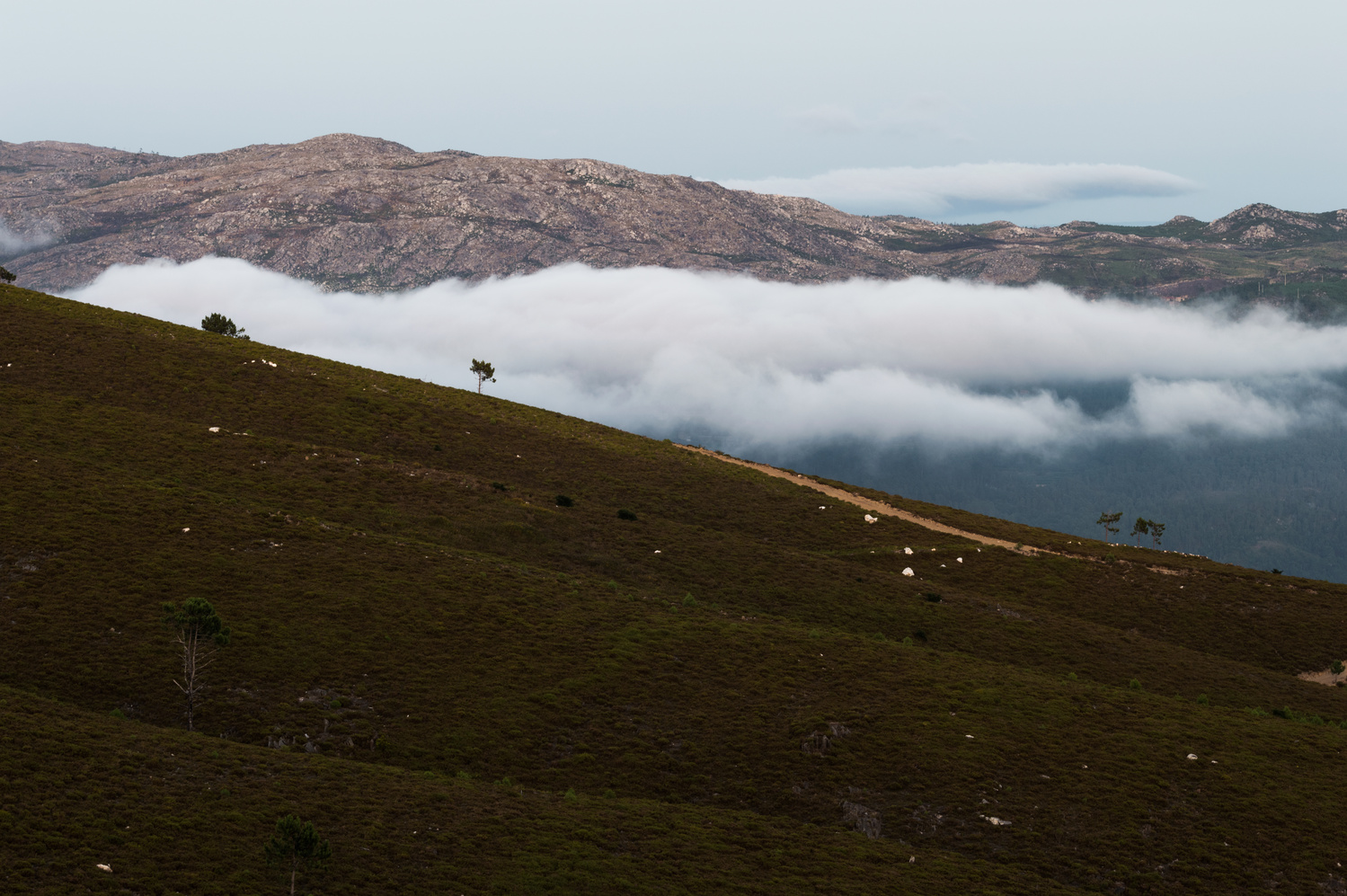 the cloud by Pedro Cunha
