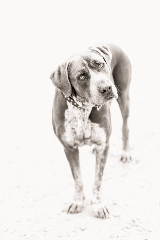 Dog by graeme bint
