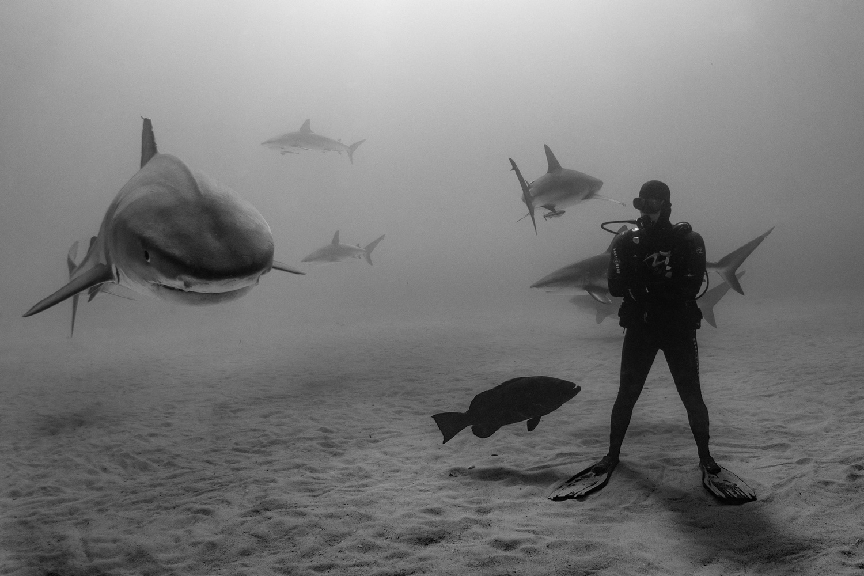 Shark shepherd by Anna Pyhäjärvi
