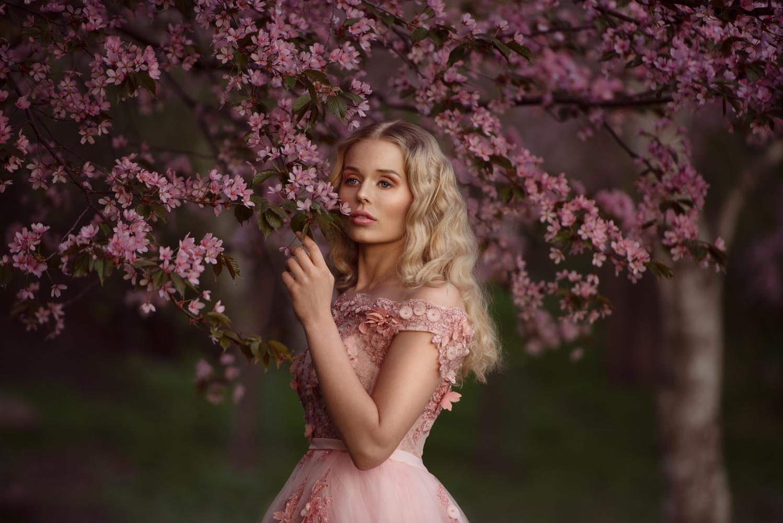 Cherry blossoms by Anna Pyhäjärvi