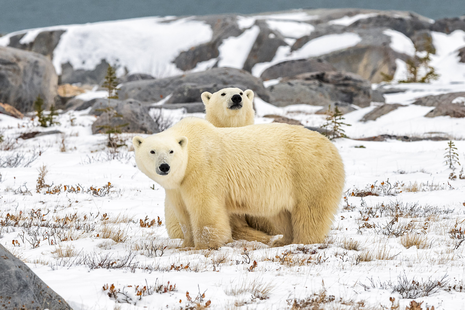 Curious Cub and Protective Mom by Noel Guevara