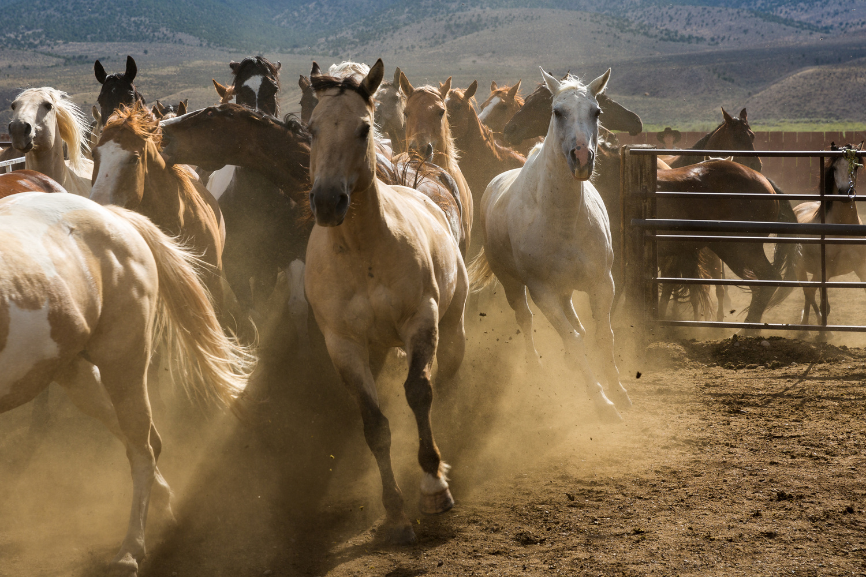 Horses Running by Jeff Blickenstaff