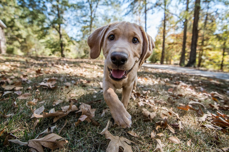 Puppy Fun by Chad Martin