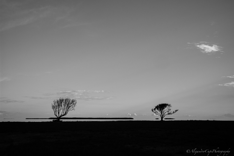 Everglades by Ale Cupi