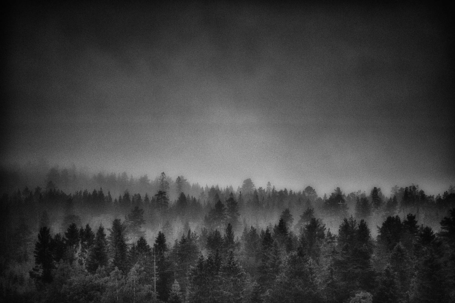 Black Forest by Wix Mo