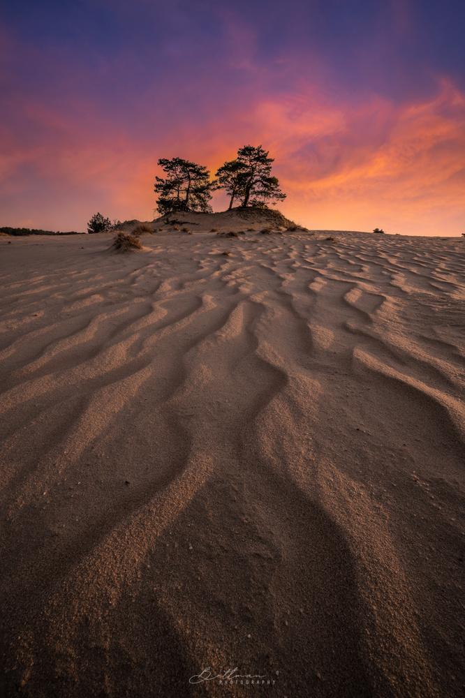 Sanddunes by Matthijs Bettman