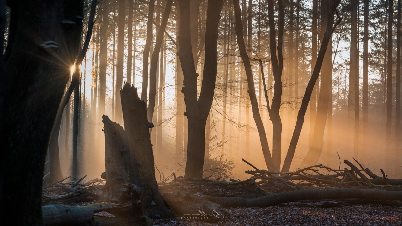 Forest light behind the tree by Matthijs Bettman