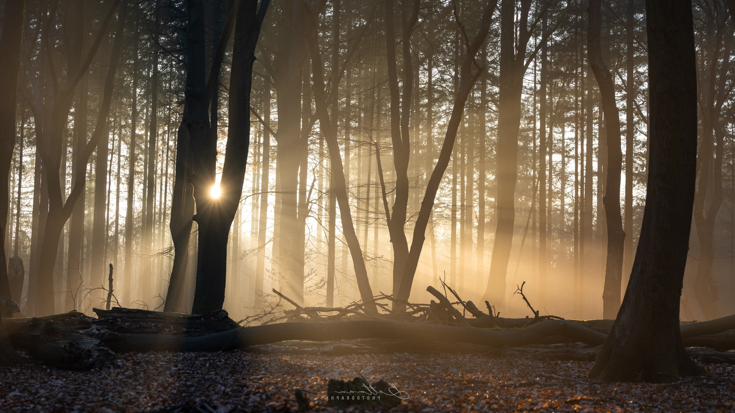 Behind the trees by Matthijs Bettman