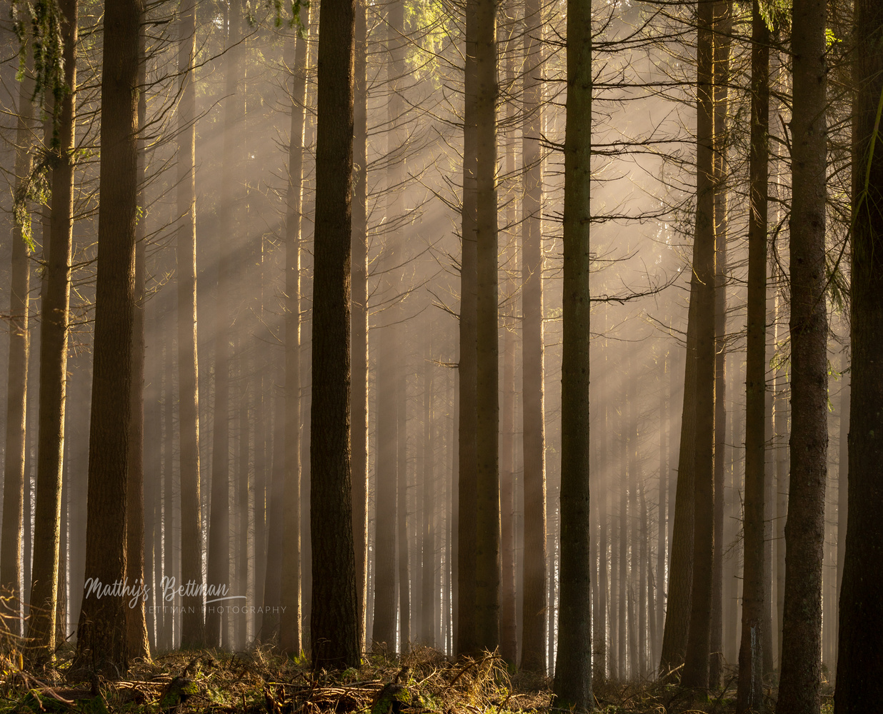 Deep into the forest by Matthijs Bettman
