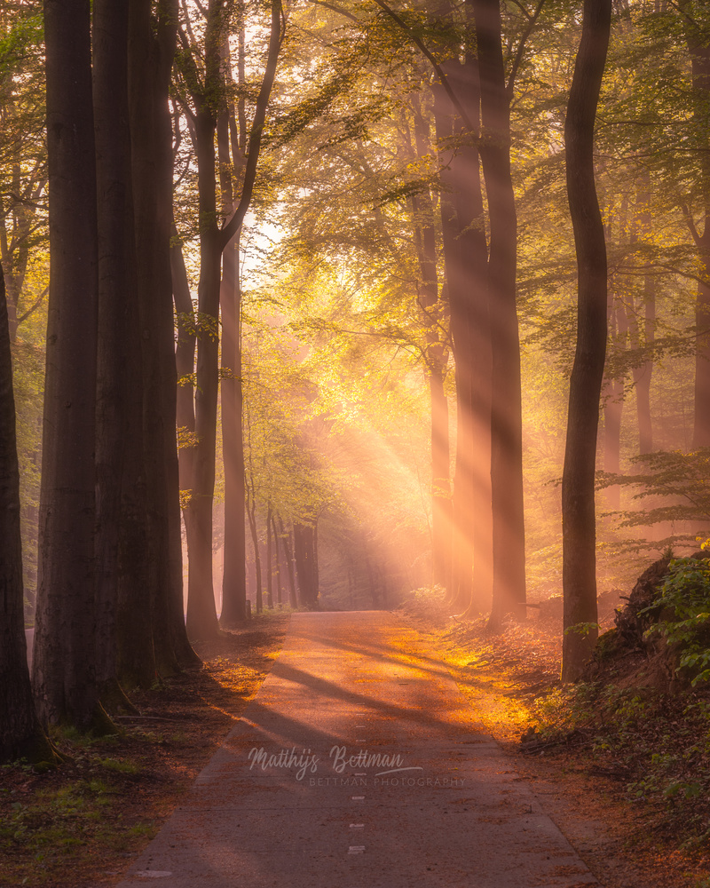 The lights and the trees by Matthijs Bettman