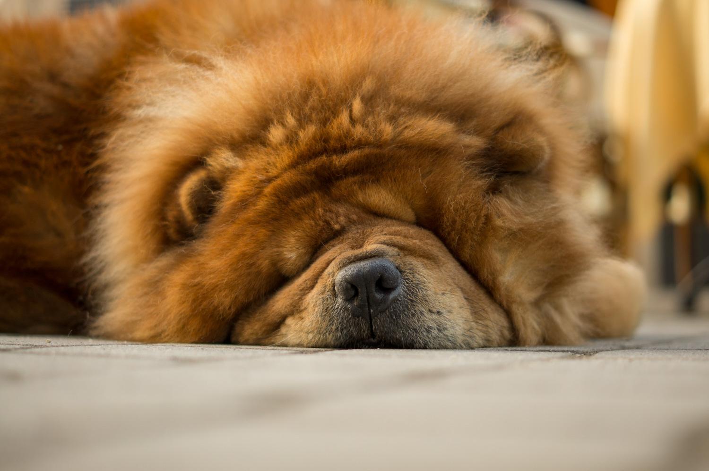 DeepSleep by Sascha Pihan