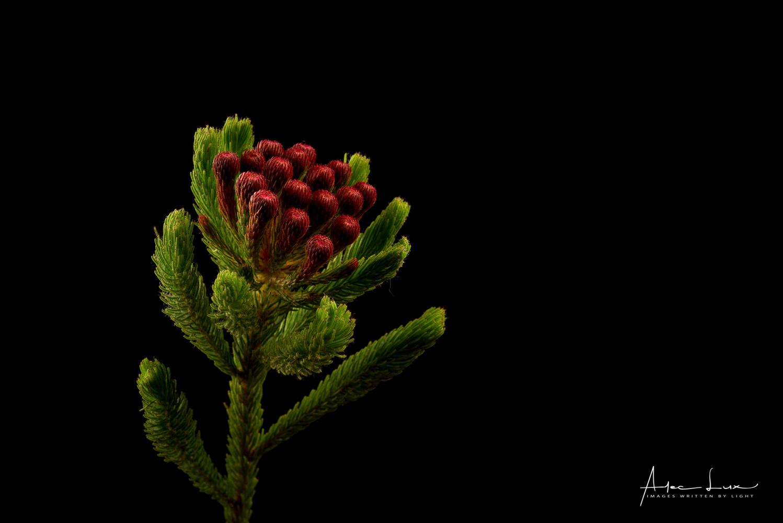 Flower 4 by Alec Lux