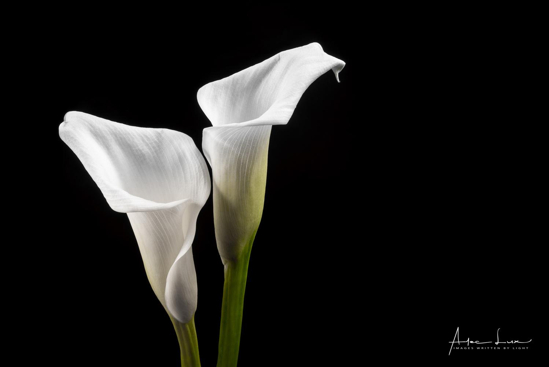 Flower 3 by Alec Lux