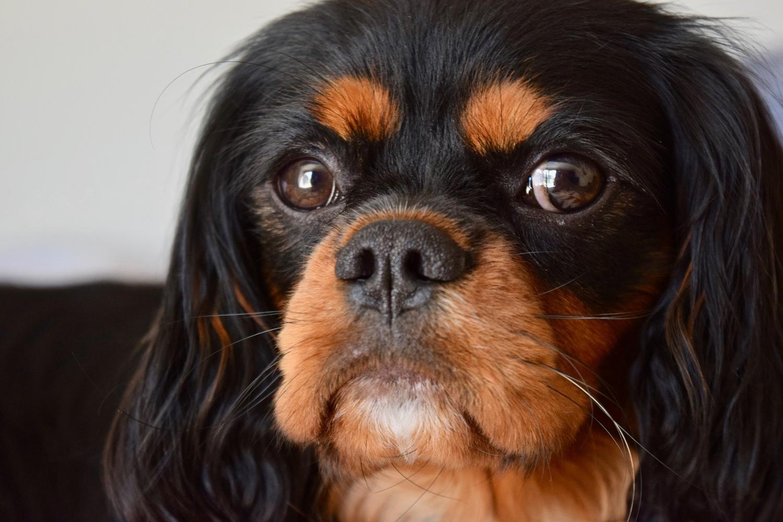 Dog portrait by Jackson Rigg