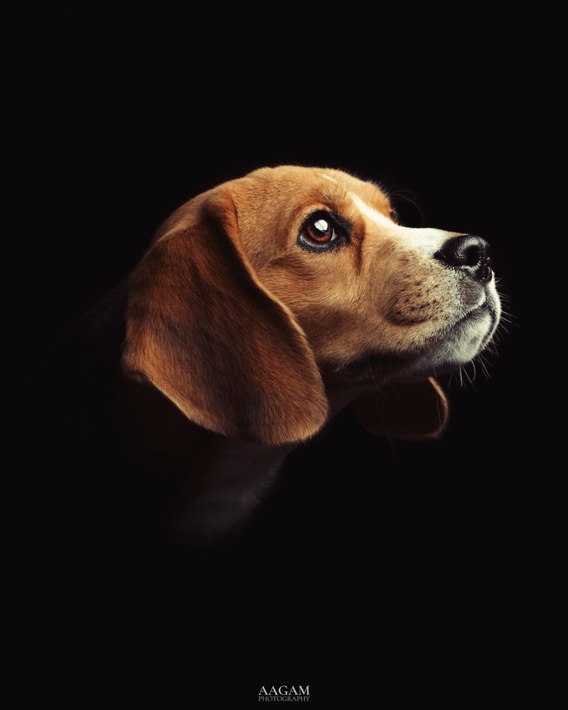 Putin the Beagle by Taranjeet Singh