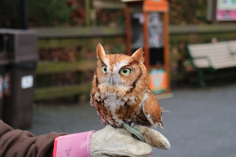 Owlie the Owl by Rene Najera