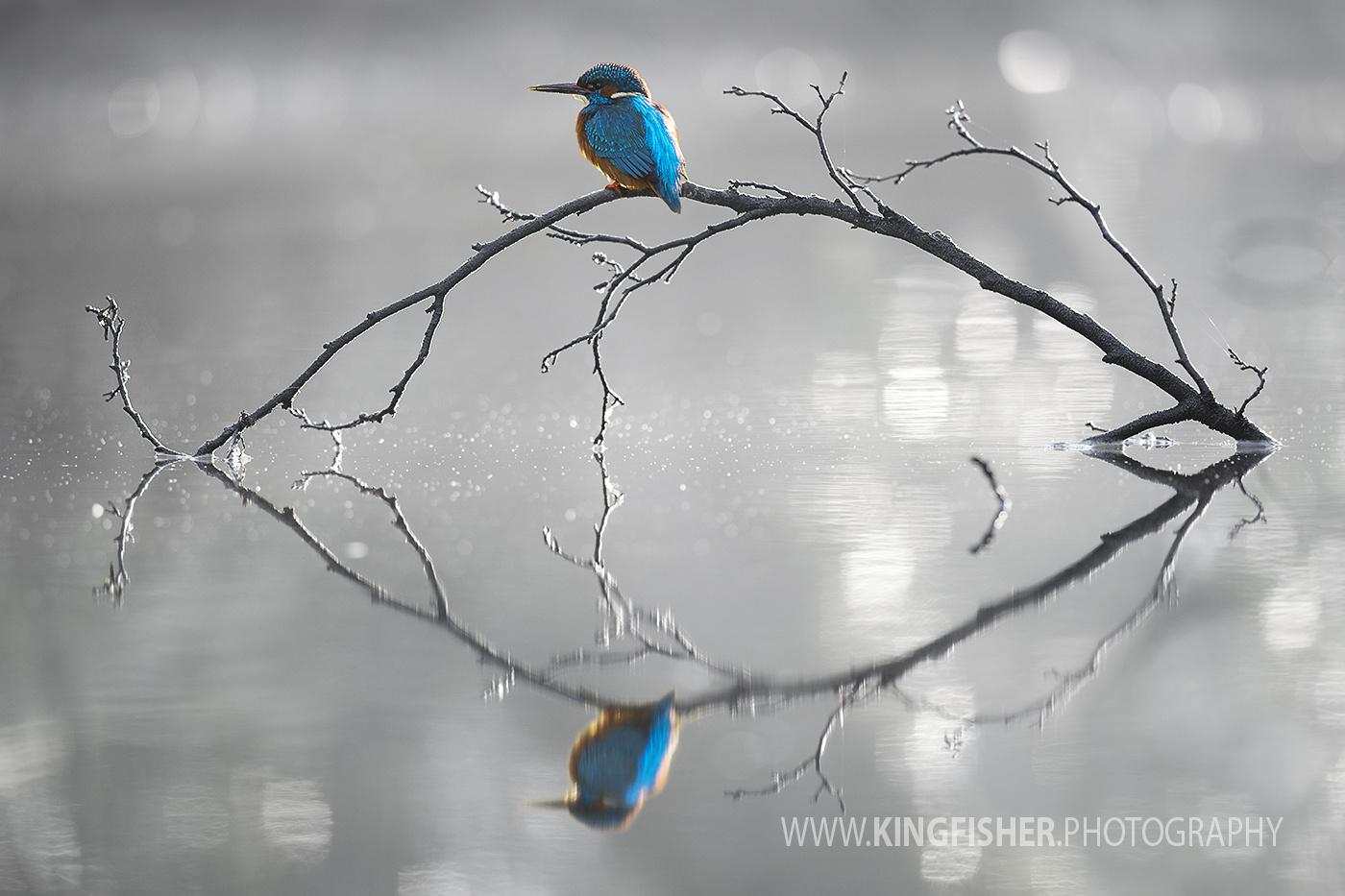 Reflection by Corné van Oosterhout