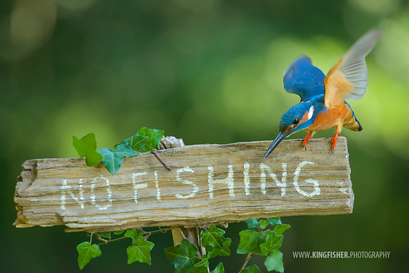 No fishing! by Corné van Oosterhout