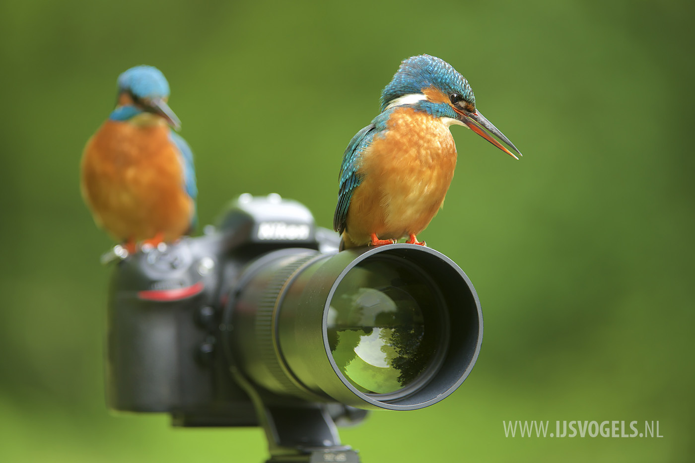You focus, I press the shutter! by Corné van Oosterhout